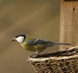 Conférence, Observer et protéger les oiseaux du jardin Présentée par Jean-Louis Cance